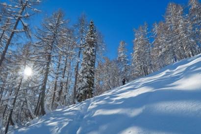 Sun trees snow.