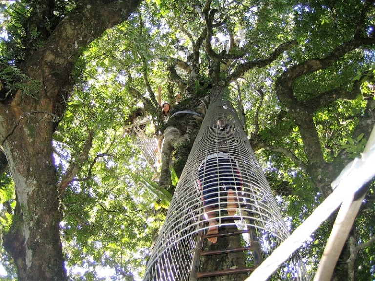 Daytrips Brisbane_Lamington Canopy2