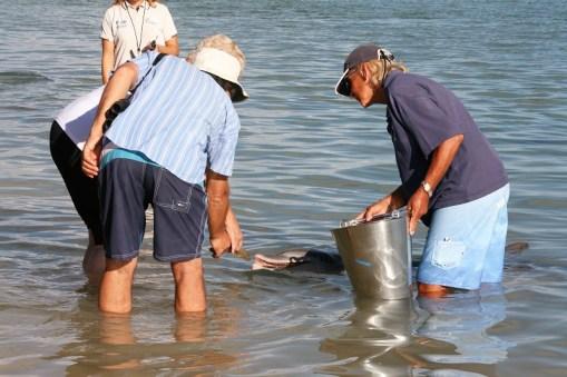 Westaustralien Roadtrip Perth Exmouth Delfinfütterung Monkey Mia Shark Bay