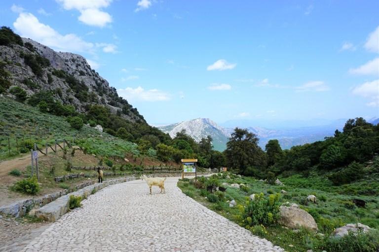 Highlights Sardinien_Dorgali nach Baunei_Silana Pass2