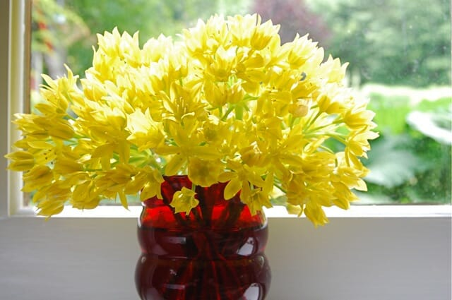 vase-of-allium-moly