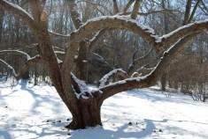 apple-pruning-2