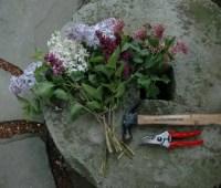 pruning roundup: what shrubs i prune when