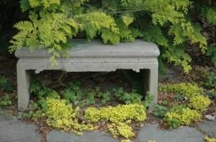gold-moneywort-and-gold-foliage-of-crippsii-chamaecyparis.jpg