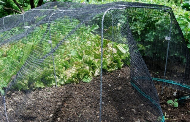 shade-cloth-on-salad