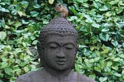 chippie-on-buddha