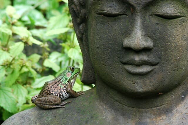 frog-on-buddha-1