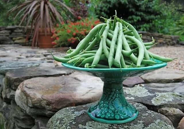 beans on pedastal