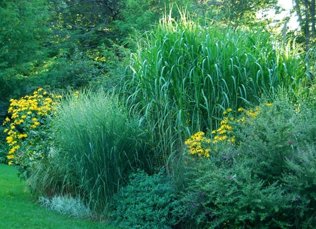 August tour aftermath any more incoming feet a way to for Large perennial grasses