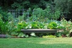 veggie-garden-august