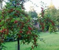 i know what birds like: 11 backyard-habitat tips