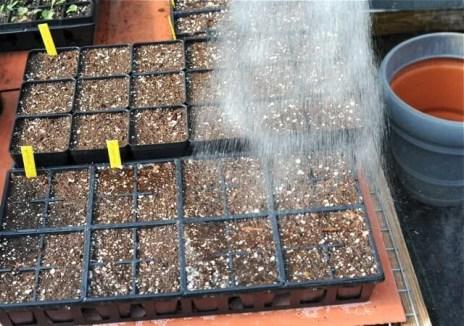 seed-starting-11