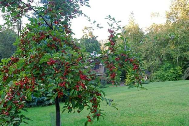 ralph-shay-in-full-fruit