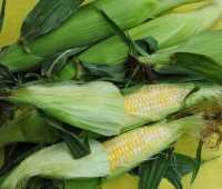 food fest 5: some kernels about corn