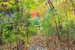 aralia-glade-fall