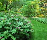 slideshow: 10 great groundcovers to rely upon