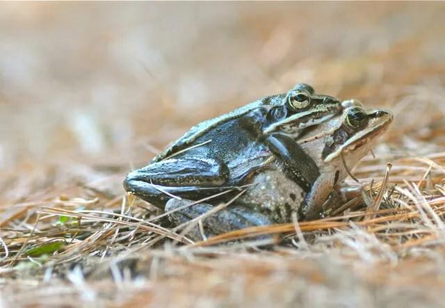 Frog porn