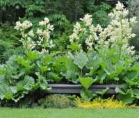 slideshow: simple was best in the 2012 garden