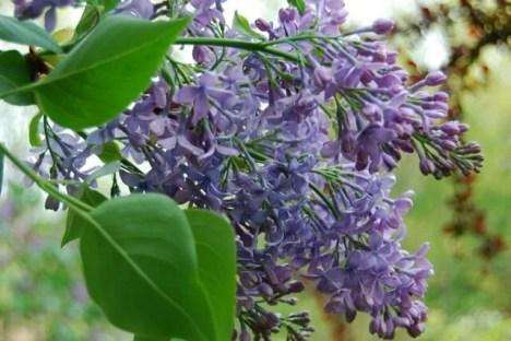 wedgwood-blue