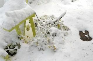 broken-magnolia-branches