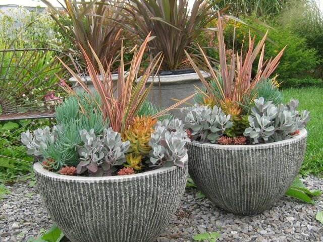 Container Garden Design small space container garden design solutions Phormium And Succulent Pots By Hyland Garden Design