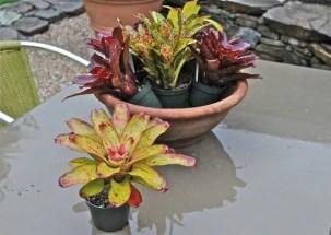 bromeliad-bowl-deconstructed