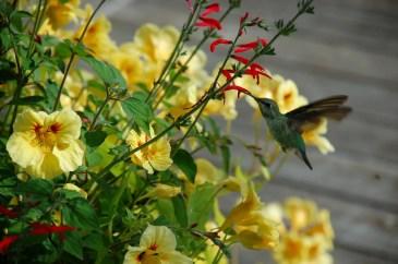 hummingbird-b0608454813d6397743d45cf5048500d672e274d