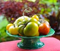 16 things i know about growing tomatoes