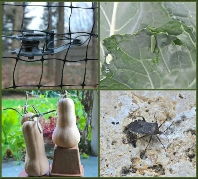 fall pest control