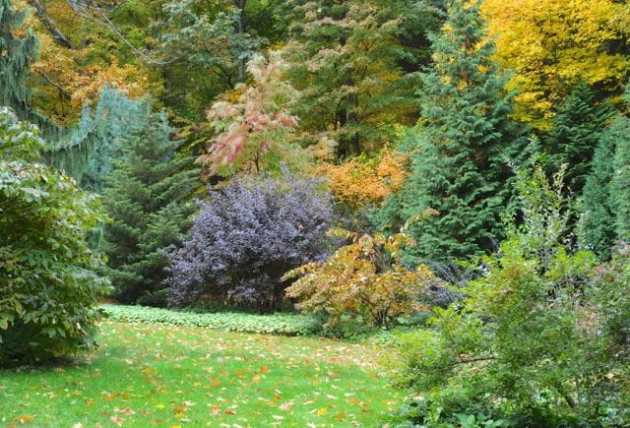 far-shrub-border-october