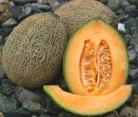 how to grow melons (plus a podcast)