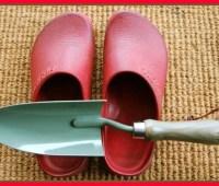 those red garden clogs of mine? birkenstocks!