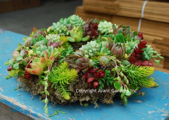 making succulent pots and wreaths, with katherine tracey of avant gardens - A Way To Garden
