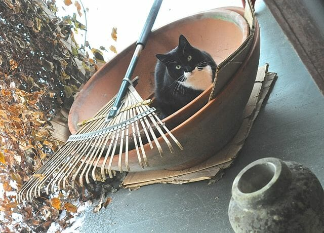 Jack in some big pots, under cover on the back porch
