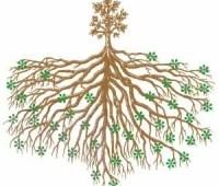 feed the soil: my experiment with mycorrhizae