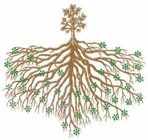 mycorrhizae illustration copyright Bio-Organics