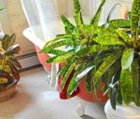 houseplant tuneup: winter care regimen