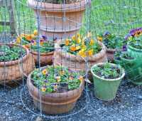 container-garden tricks (and trickster skunks), plus other recycling in the spring garden