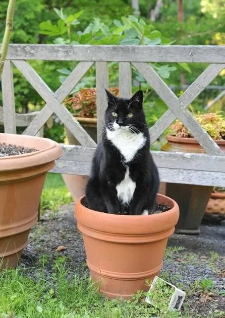 Jack the Demon Cat on his catnip throne