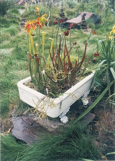 Mini bog in an antique tub, by Jana Olson Drobinsky