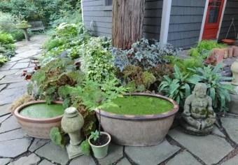 houseplants-by-kitchen-door-jpg