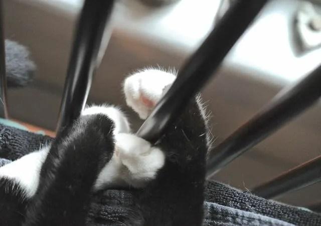 Jack's paws hug the chair rails