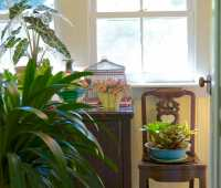 how to store tender plants, with dennis schrader