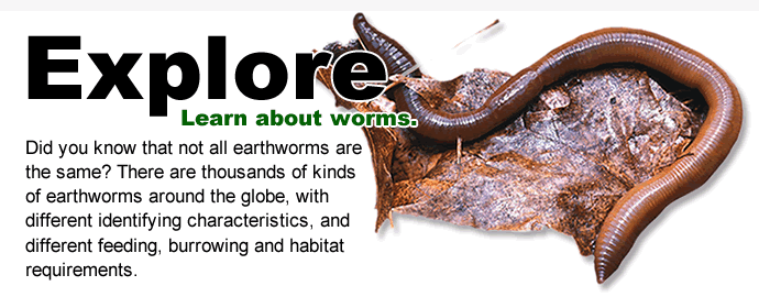 Earthworms, from Great Lakes Worm Watch