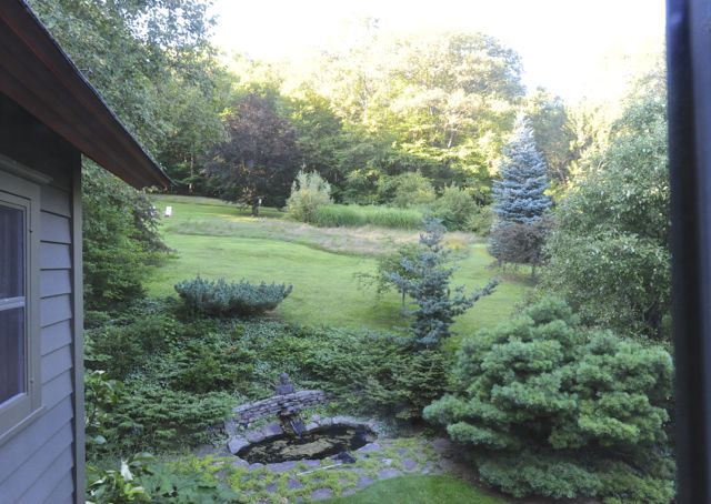 High summer view out back window of unmown area above house