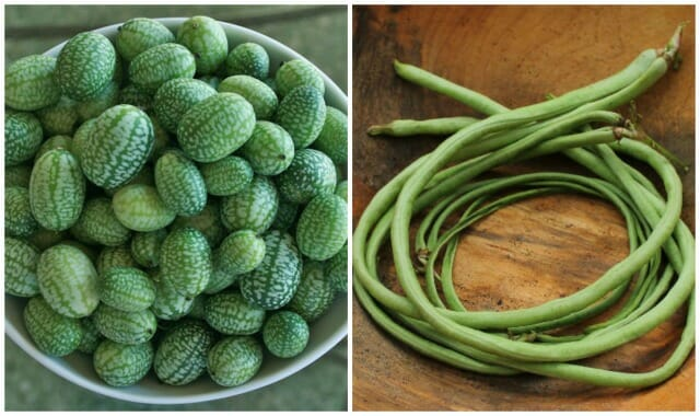 mexican gherkins asparagus bean sow true seed