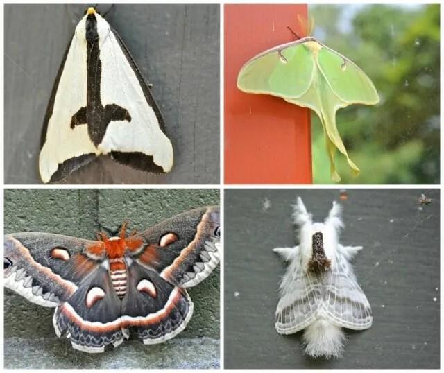 moth collage 2