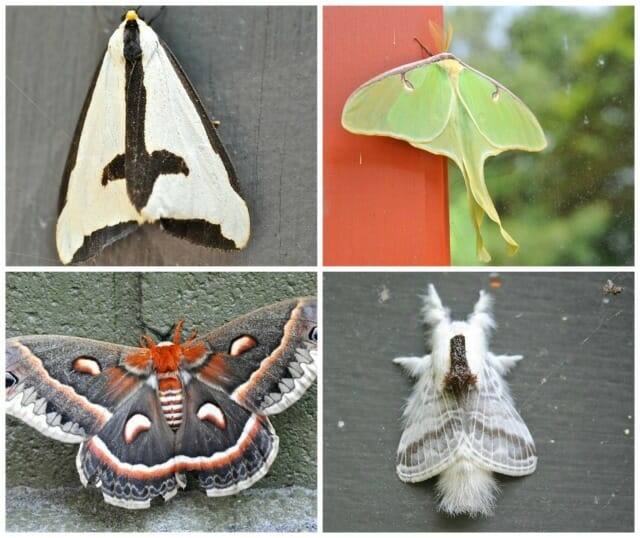moth collage 2
