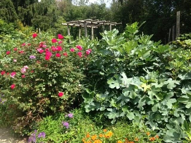 michael judd garden