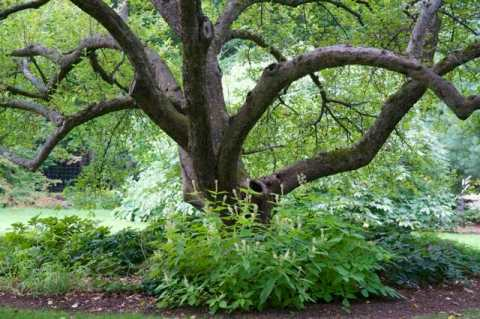 Everyone always remarks on the century-old apples, underplanted with shade perennials.